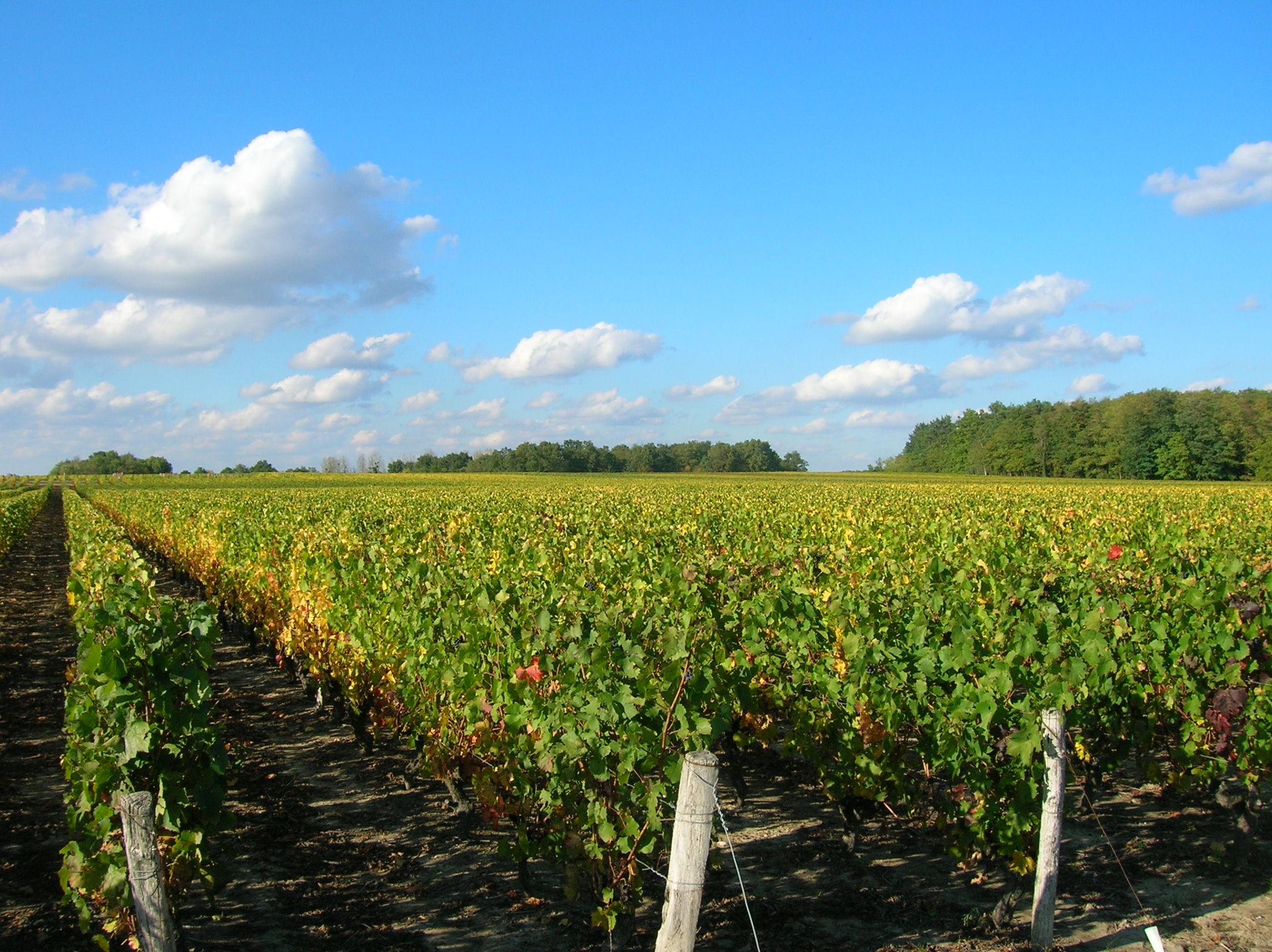 Salon des Vins de Loire / Loire Valley Wine Fair / Angers